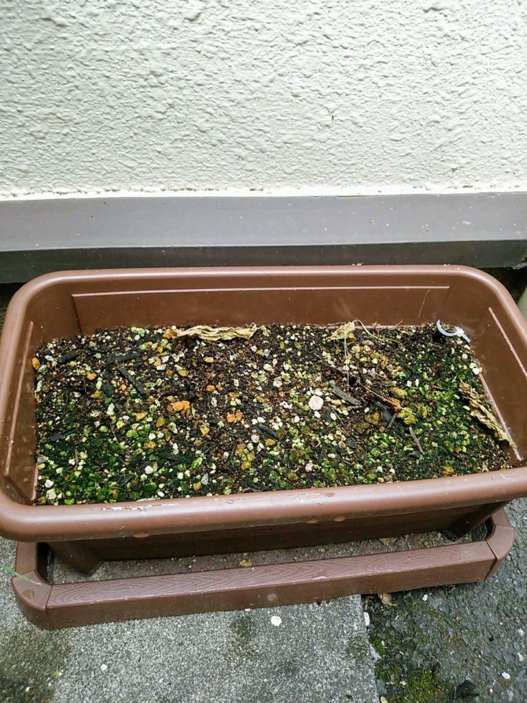 ゴーヤの苗と道具を取り除いて土だけになったプランター