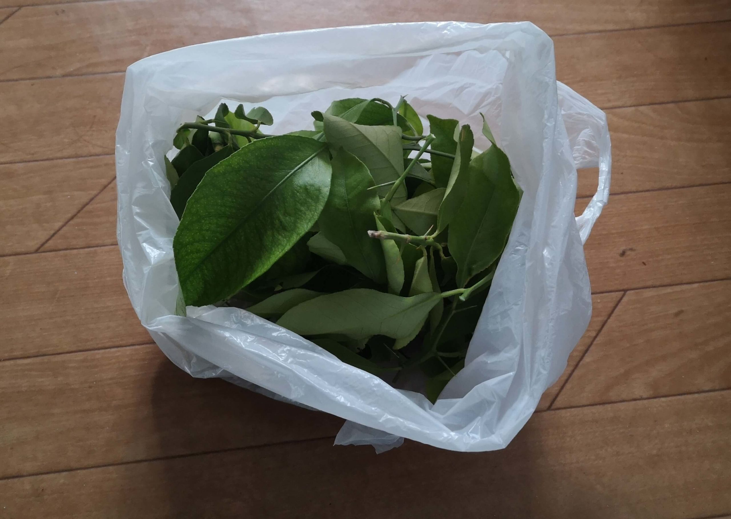剪定したレモンの葉っぱが入った袋