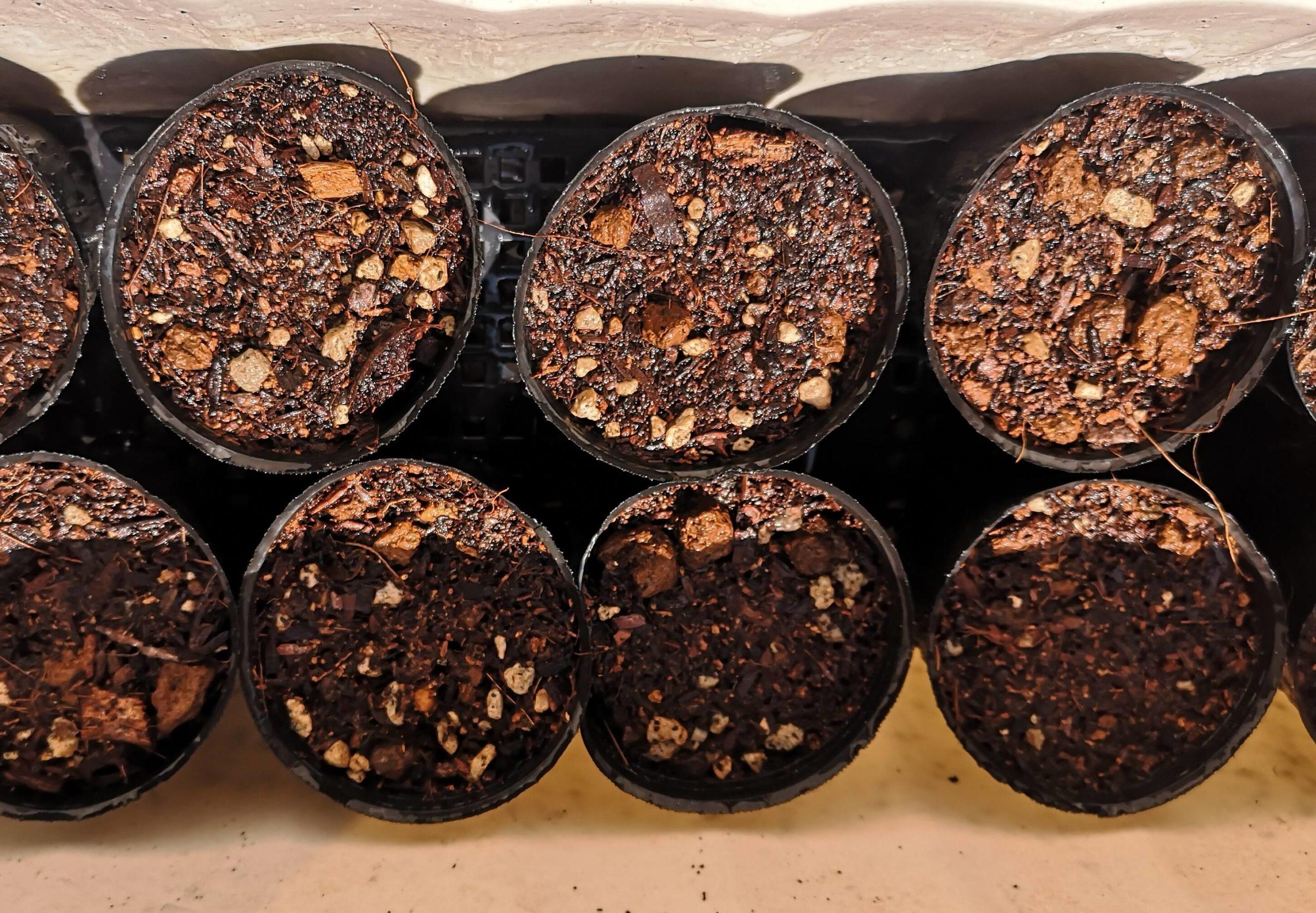 トマトの種が入ったポリポットをプランター内で育苗させている