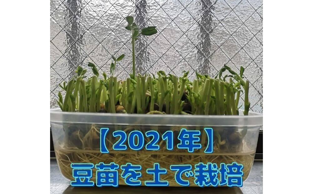 2021豆苗栽培アイキャッチ